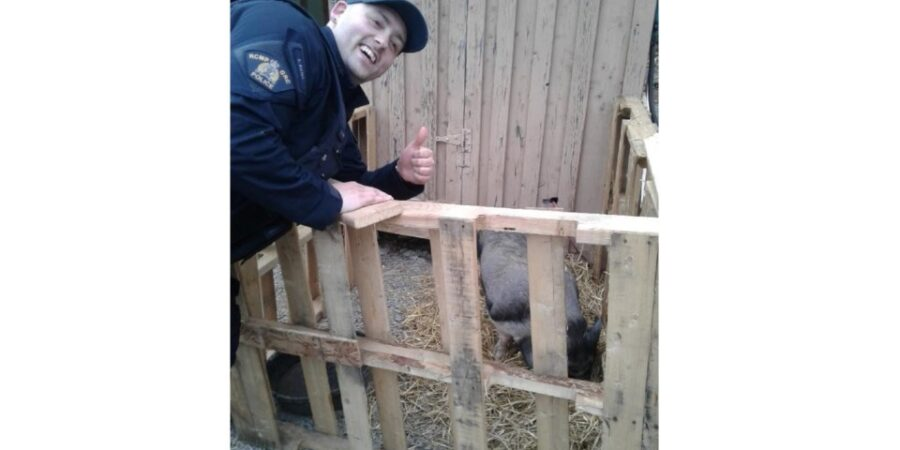 mia-loose-pig